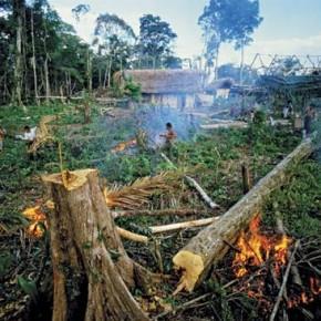 Rainforest destruction