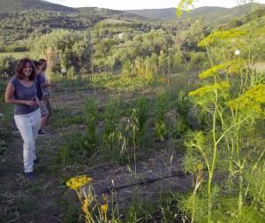 Costas' Garden