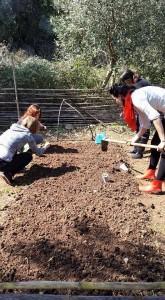 Ecogarden2-garden